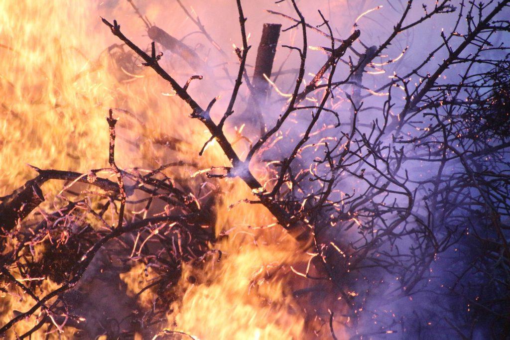 impatto ambientale carne e derivati - incendio boschivo