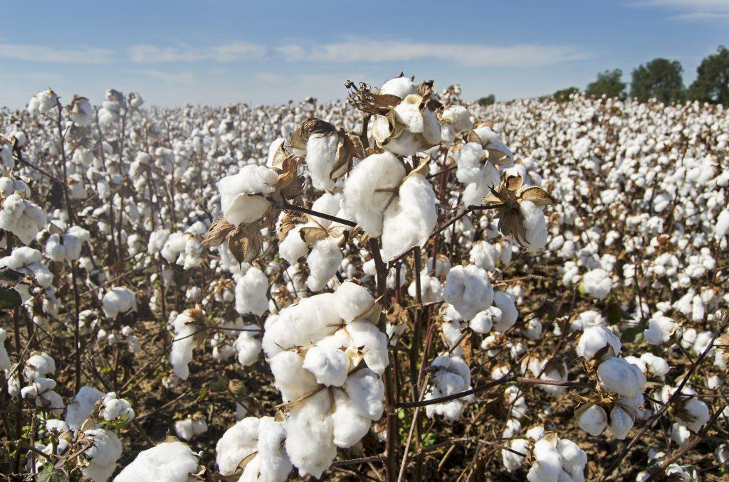 quanto costano i vestiti  cotone