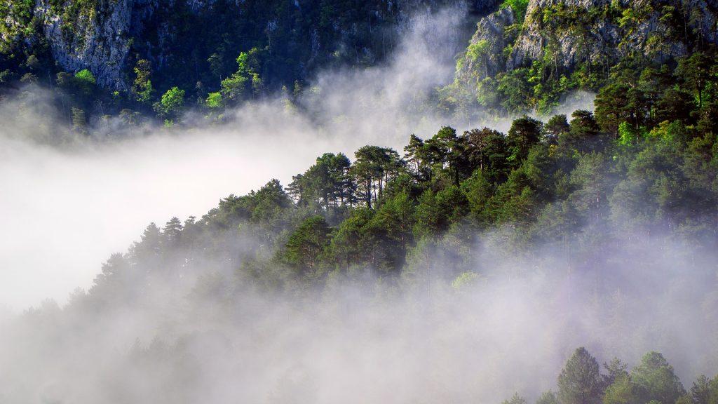 Le foreste europee sono a rischio a causa dei cambiamenti climatici