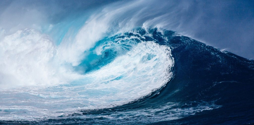 posidonia protezione mare cambiamenti climatici - protezione da mareggiate