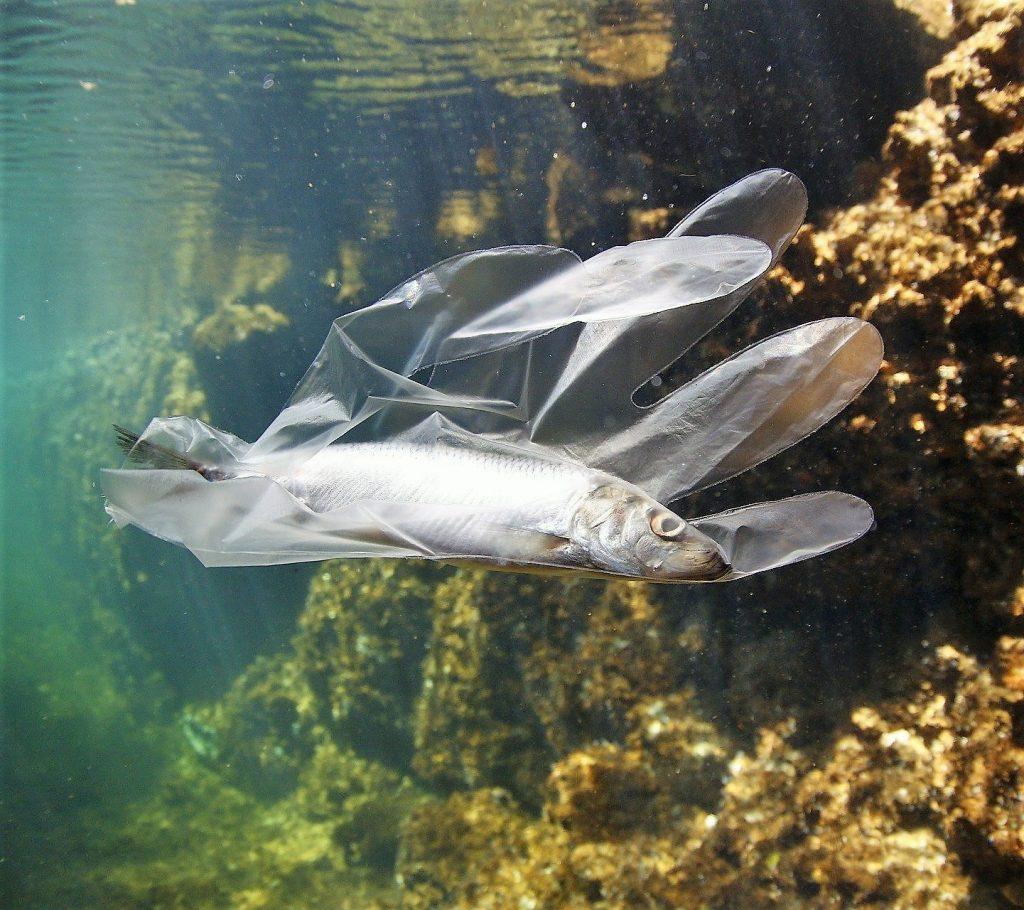 verità riciclata plastica - pesce in guanto di plastica