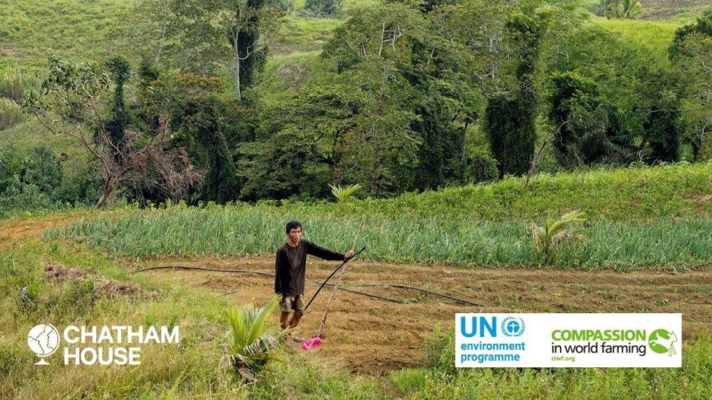 """""""Un milione di specie rischia l'estinzione"""", la colpa è del sistema alimentare globale"""