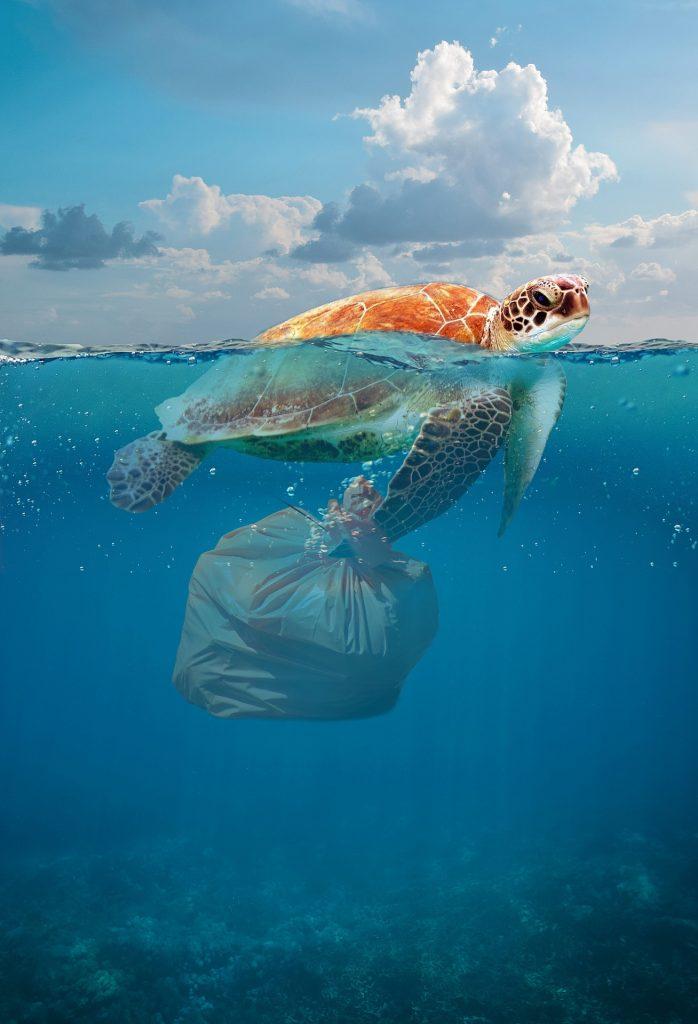 isole plastica mare  - tartaruga con spazzatura