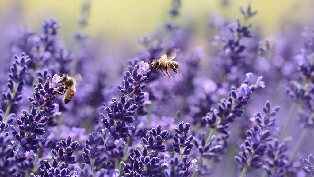 Biodiversità: proteggerla è un nostro dovere